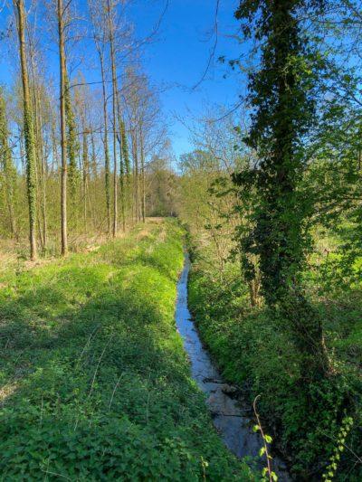 Winterbeek