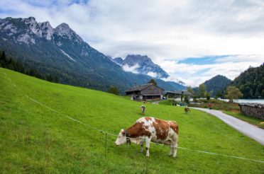 Hintersteiner See-Rundweg – Scheffau