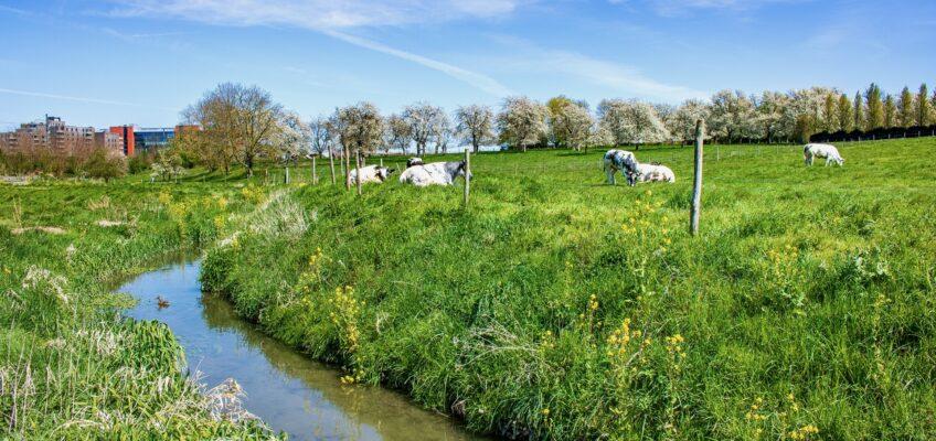 Wandeling door de vallei van de Molenbeek – Halmaal